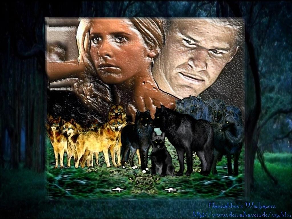 B/Aus wolves